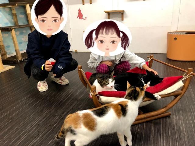 猫とふれあい